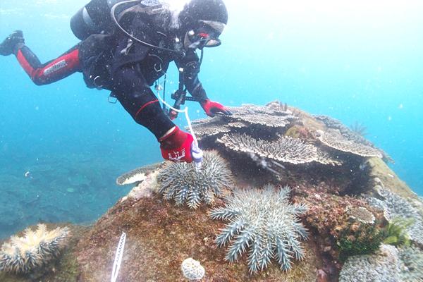 オニヒトデを倒す勇者。酢酸を注射して海中でオニヒトデを駆除しています。