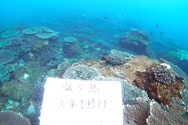 塩子島のサンゴが広がる風景。見渡す限りテーブルサンゴ。