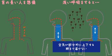 浅い呼吸をしてしまうと、気道の空気の一部が上下するだけで、肺まで空気が届きません。