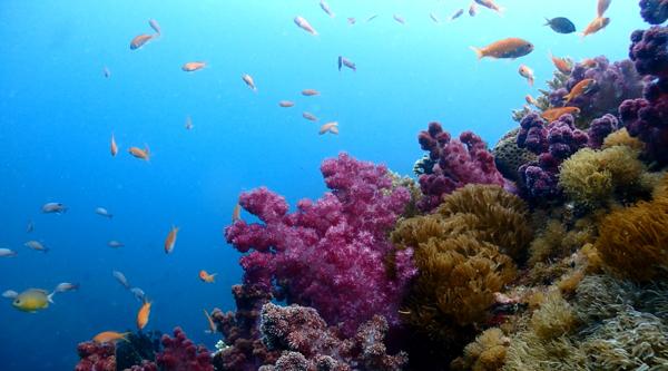 浅い場所は光が入って、オオトゲトサカが綺麗に写ります。その上には金魚ハナダイがコロニーを作って、人の目を飽きさせません