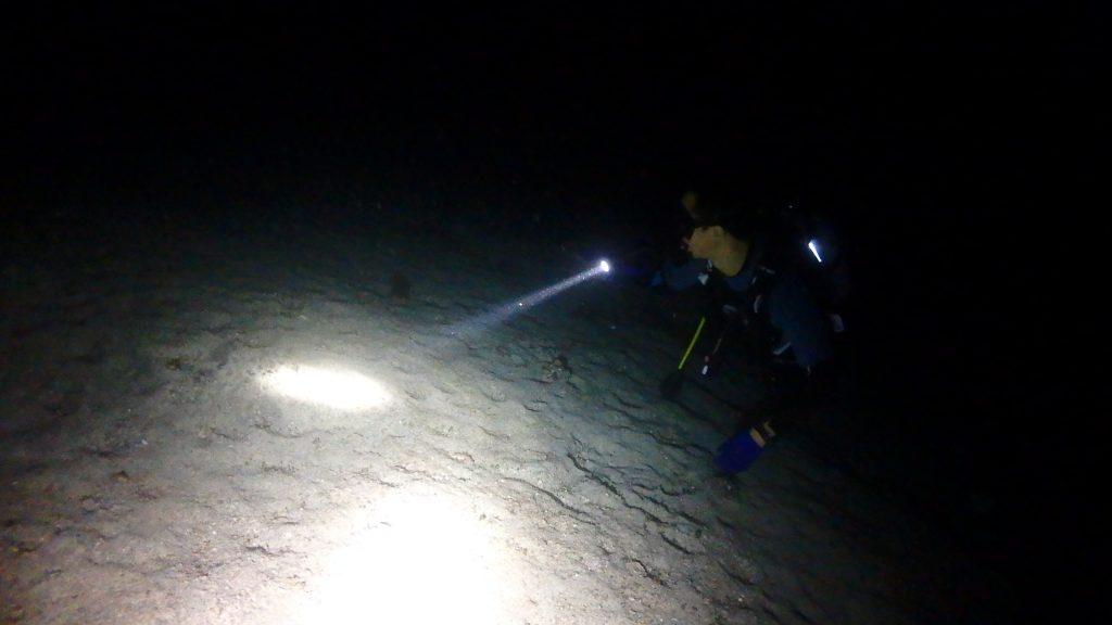 砂地をライトで照らしながら探索するアドバンスドの受講生