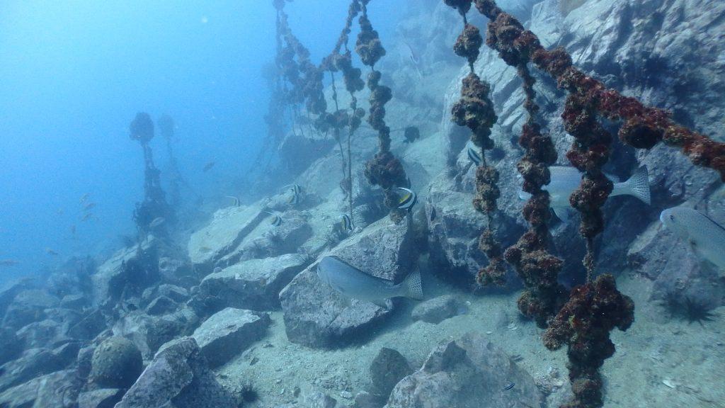 カキの養殖跡が海底に沈むポイント