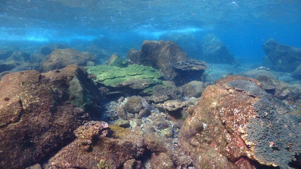 何年も続くサンゴ群生。鹿島コーラルビーチは夏場に海水浴を楽しむ旅行者が大勢いる為、この場所でスノーケリングも盛んになる