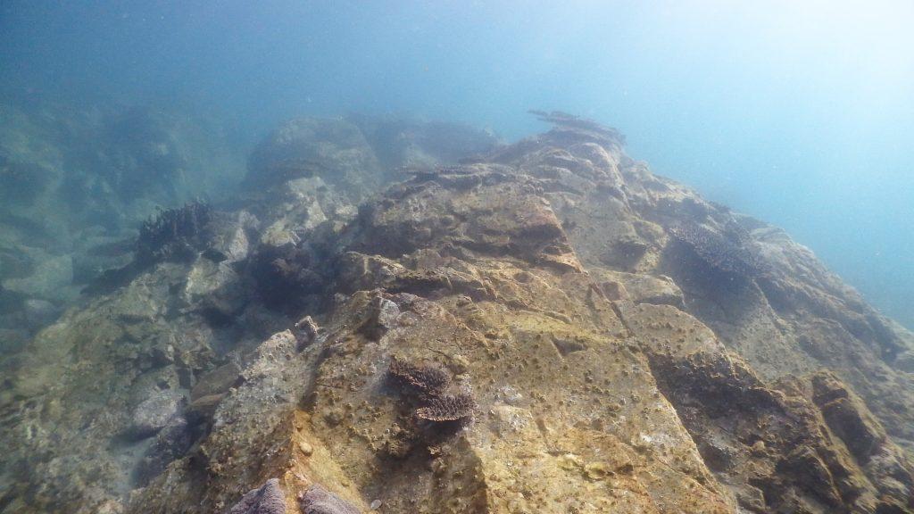 岩肌が見えている部分は、サンゴが生える可能性がある場所