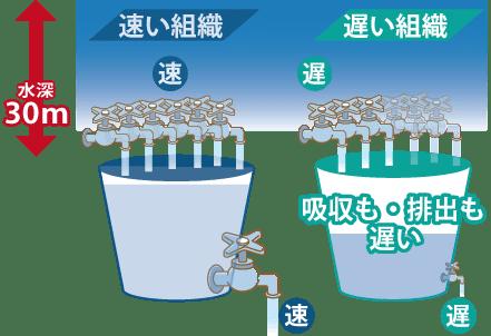 速い組織の逆で、遅い組織は、窒素の吸収と排出、両方共遅いです。30mのように深い場所でも、速い組織と比べると、遅い組織は吸収が遅いです。