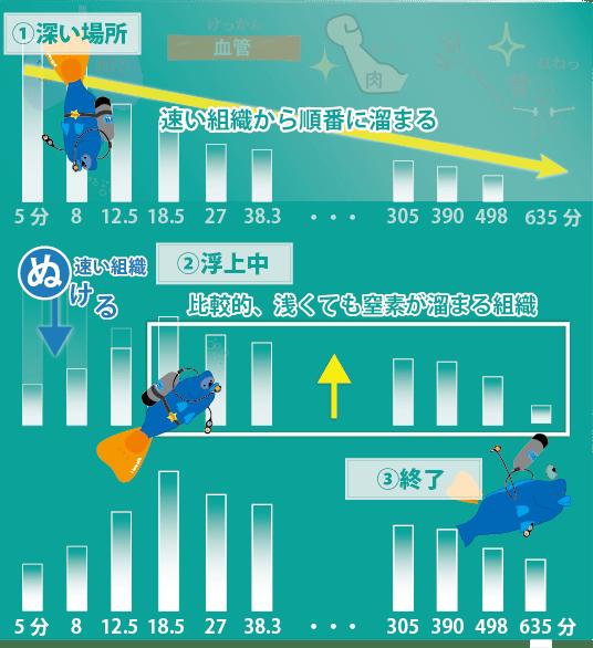 模範潜水をした場合の窒素量を、ダイビングの①最初のころ②浮上中③ダイビング後に分けて書きました。