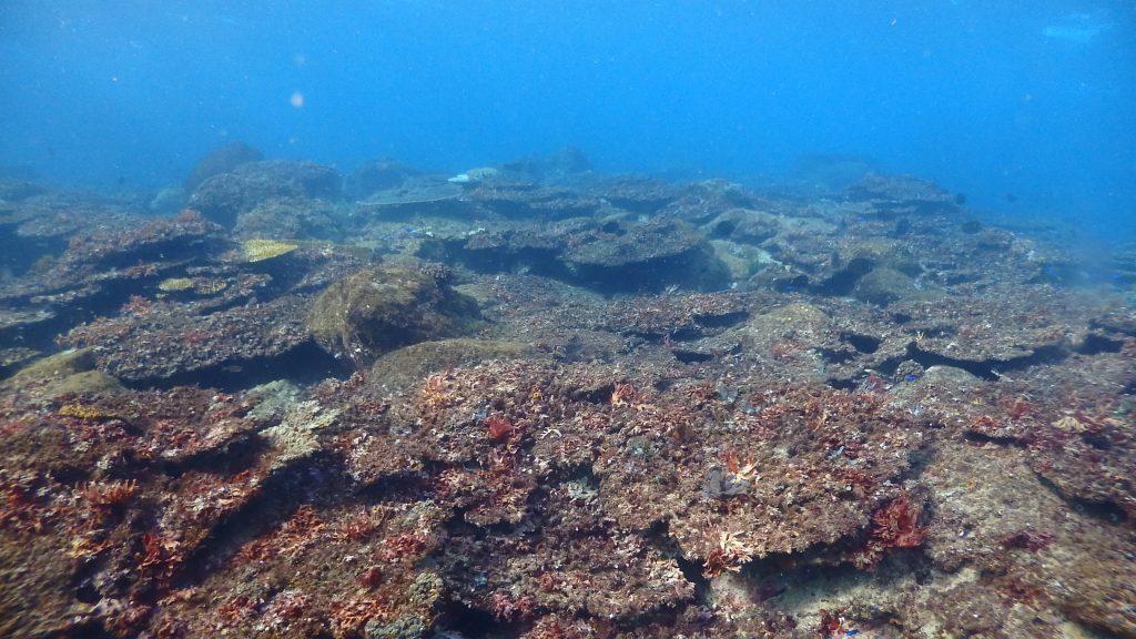 2018年の豪雨災害の影響を受けて、一斉に白化したサンゴ。一年以上たって、完全にガレキの山となりました