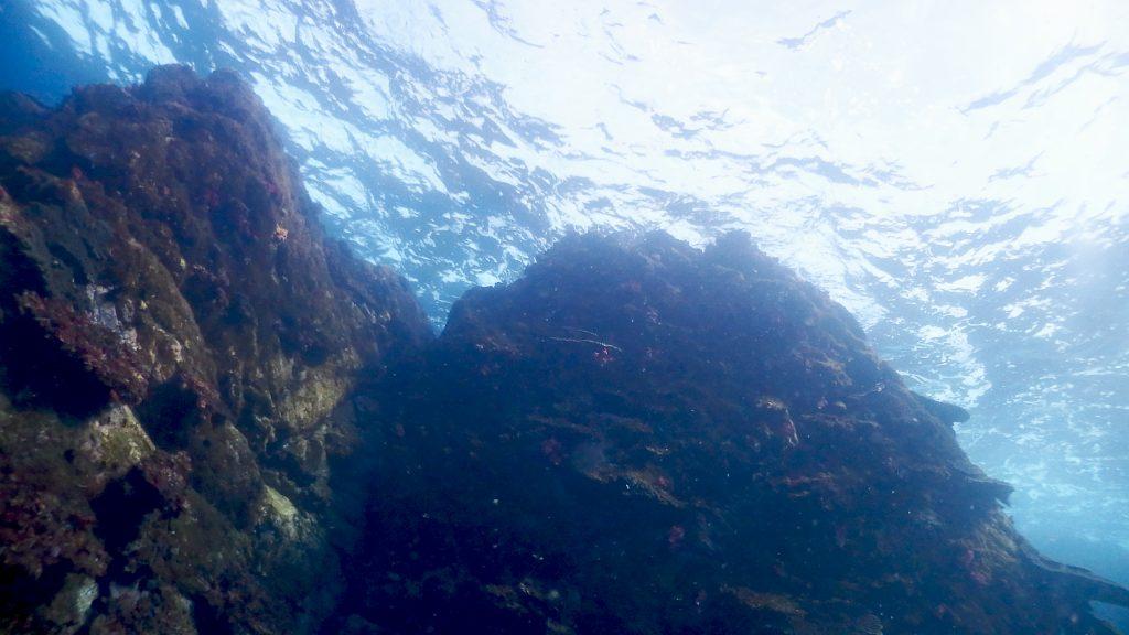黒潮の影響を受けて、透明度がとても良い海中の様子
