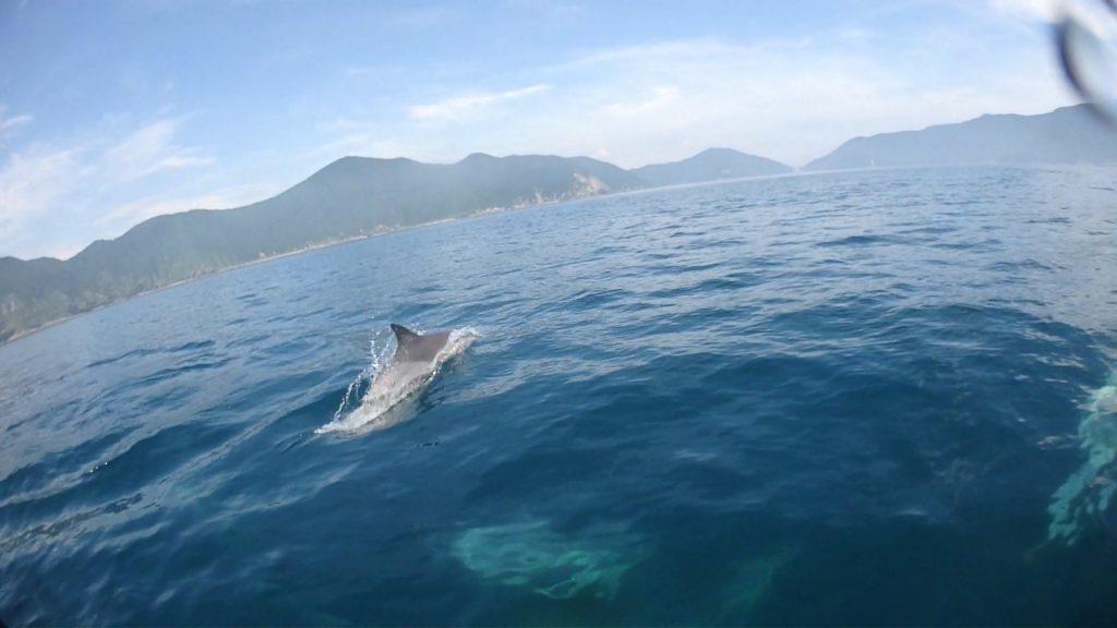水面に出たイルカだけでなく、水中にも何匹もいることが、船の上から肉眼で確認できる程近くによってくれました。