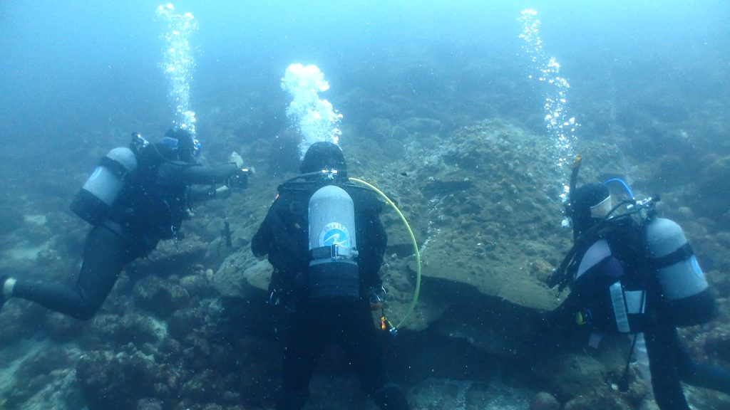 年齢300歳を超えると思われる大きなハマサンゴ。その周りには、アカオビハナダイなどの魚がコロニーを作って生活しています。