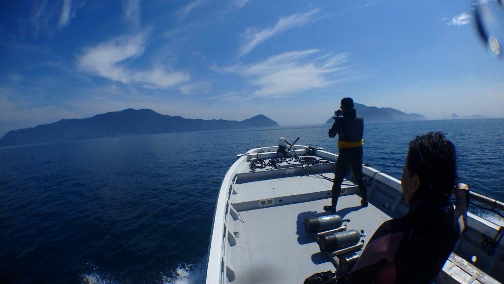 帰りにイルカの大群に囲まれる船。慌てて船の先端まで、カメラを持って出ていきます。