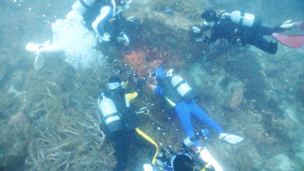 オオモンカエルアンコウはダイバーから人気のある魚。だれかが見つけるとみんなで集まって写真を撮ります。
