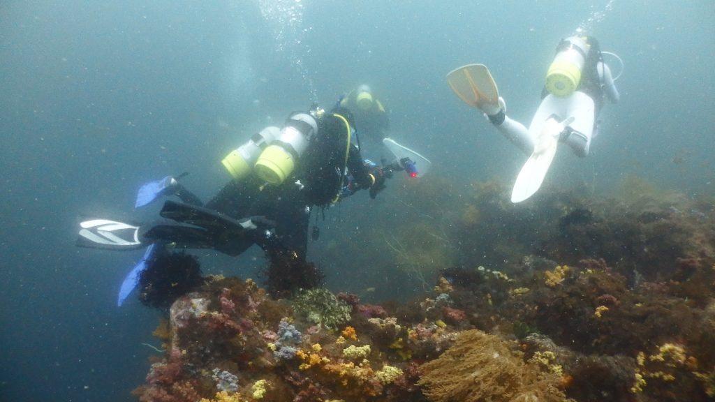 きつい流れに向かって泳ぐ集団。その下にはサンゴ群生が広がります。