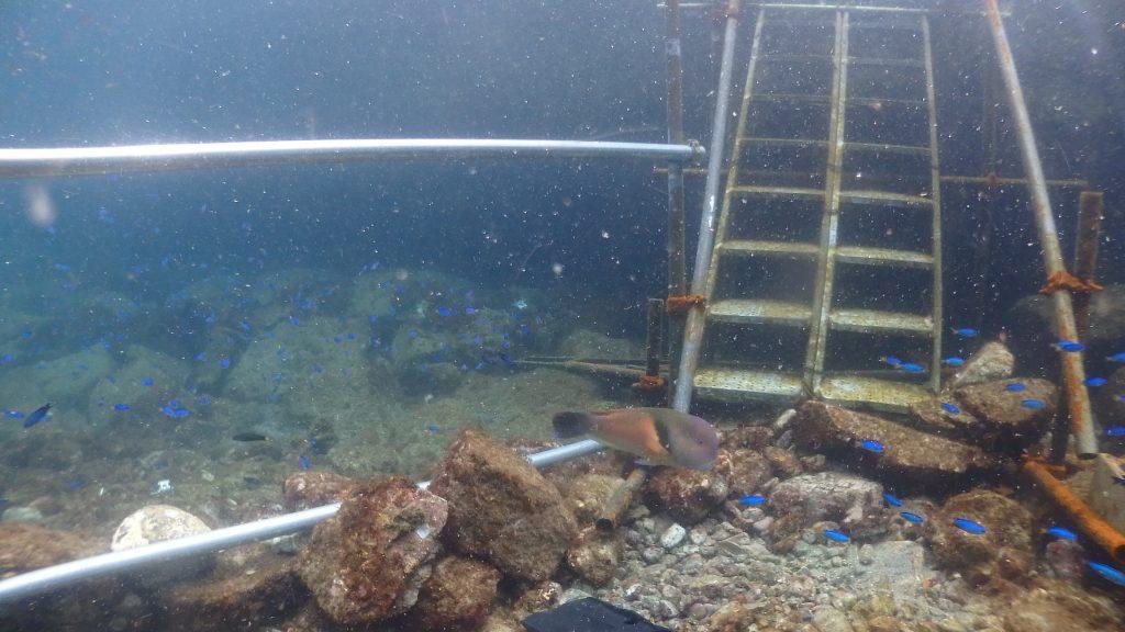 階段から直接伸びた手すり。これがあると皆様が水中に入るときに安全になります。