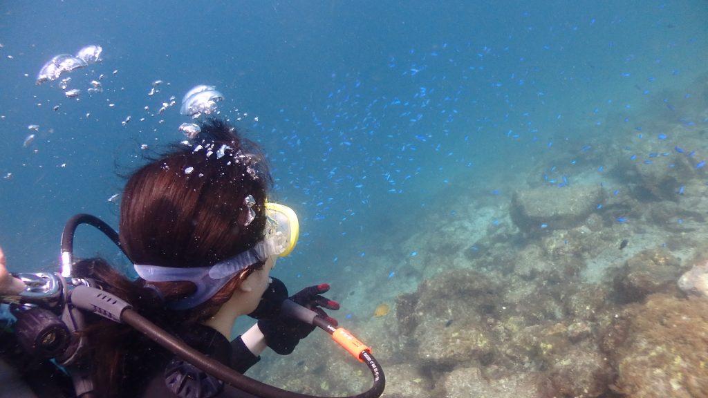 後ろから隠し撮り。深い方には青い魚ソラスズメダイが沢山群れているのが分かります。