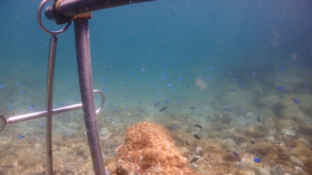 水中へ降りた瞬間にカラフルな魚たちが目を楽しませてくれるシーウォーカー。