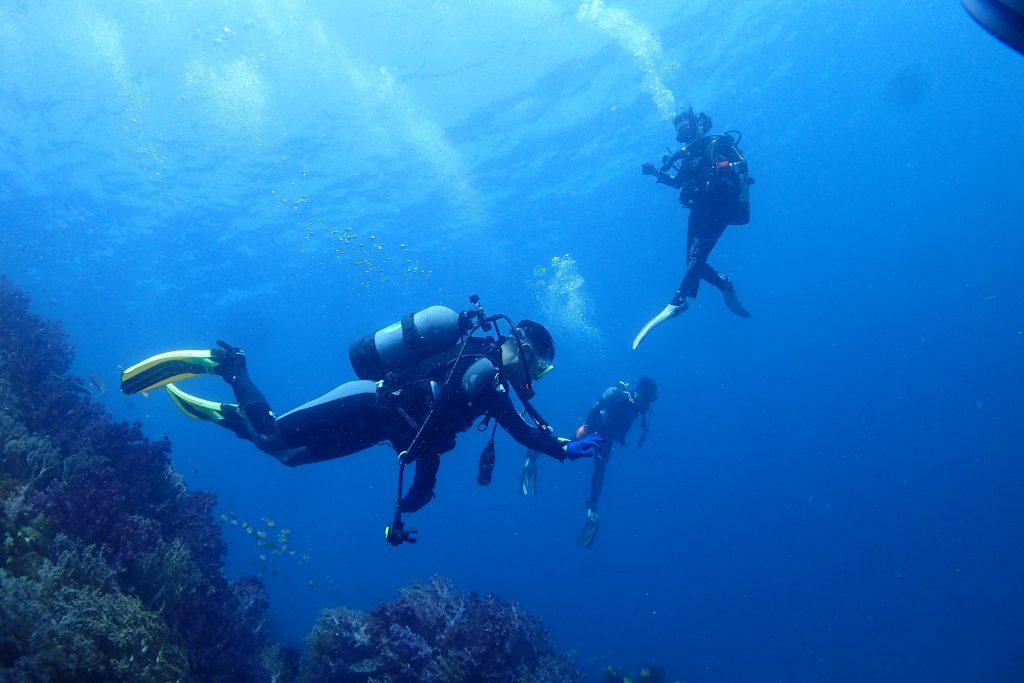 黒潮が入ると、遠くで泳いでいるダイバーがはっきりと視認できる程、とても水が綺麗になります。