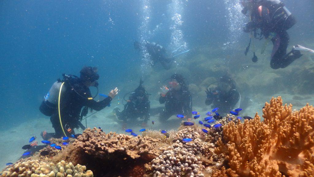 体験ダイビングの3名の女性は水底に膝をついて、綺麗なサンゴや魚の名前をインストラクターから教えてもらっています。もう一人の女性ダイバーはライセンスを所有しているので、水中に上手に浮かびながらインストラクターが書く文字を見ています。