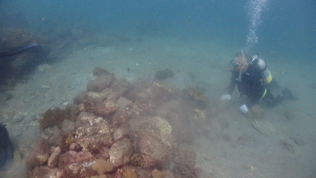 台風が原因で起きた波は深い場所まで影響を及ぼします。水深5m付近のサンゴがボロボロになってしまいました。