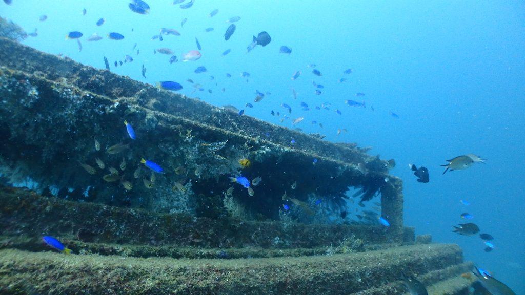 昔、海の中に沈めた漁礁にはサンゴが沢山付着していて、生き物が集まる重要な住処となっています。