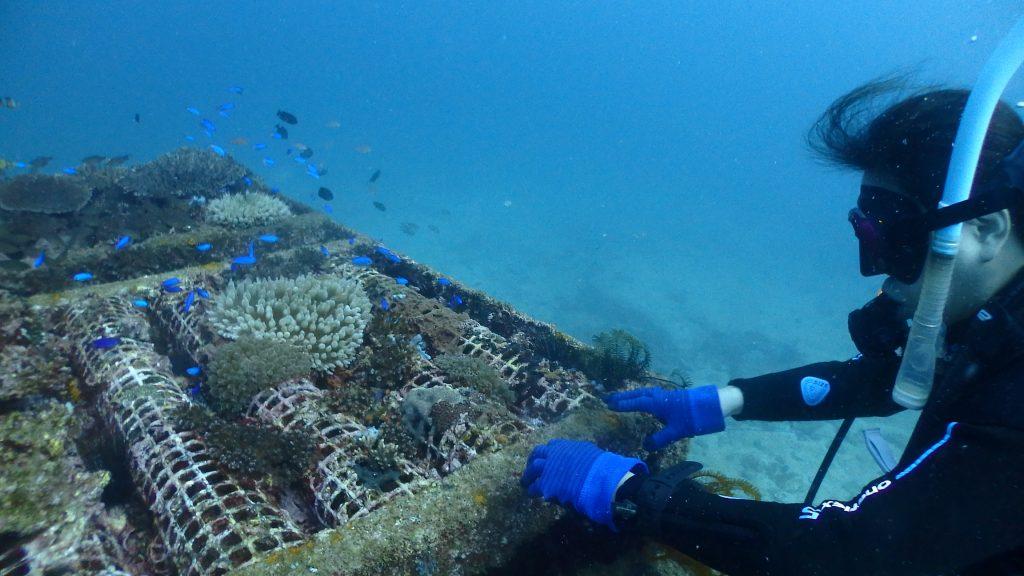 漁礁の上をのぞき込む女性ダイバーは、青い魚ソラスズメダイが沢山いる様子をみれてうれしそうです