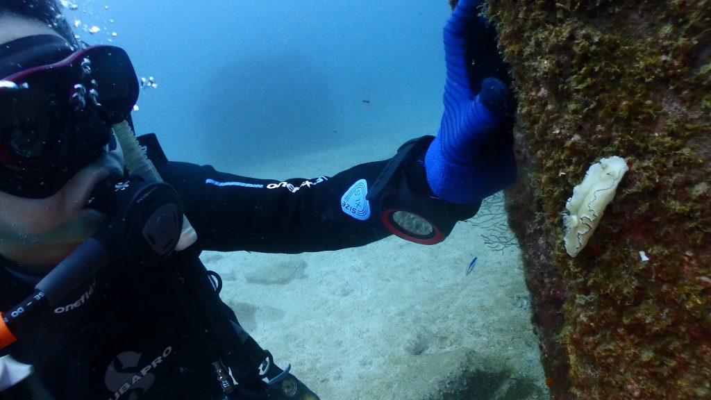 漁礁の柱にはウミウシが歩いていることが頻繁に見られます