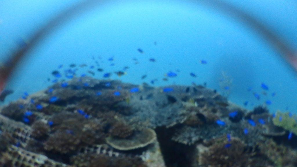 漁礁には沢山魚が集まっているのですが、カメラのレンズ部分に浸水があって、きちんとした映像がとれていませんでした。