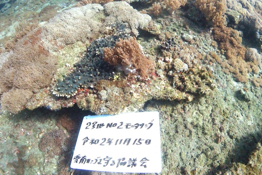 岩の上には死んでしまったサンゴが見えていますが、その上に新しいサンゴが成長していました。とても生き生きとしています。