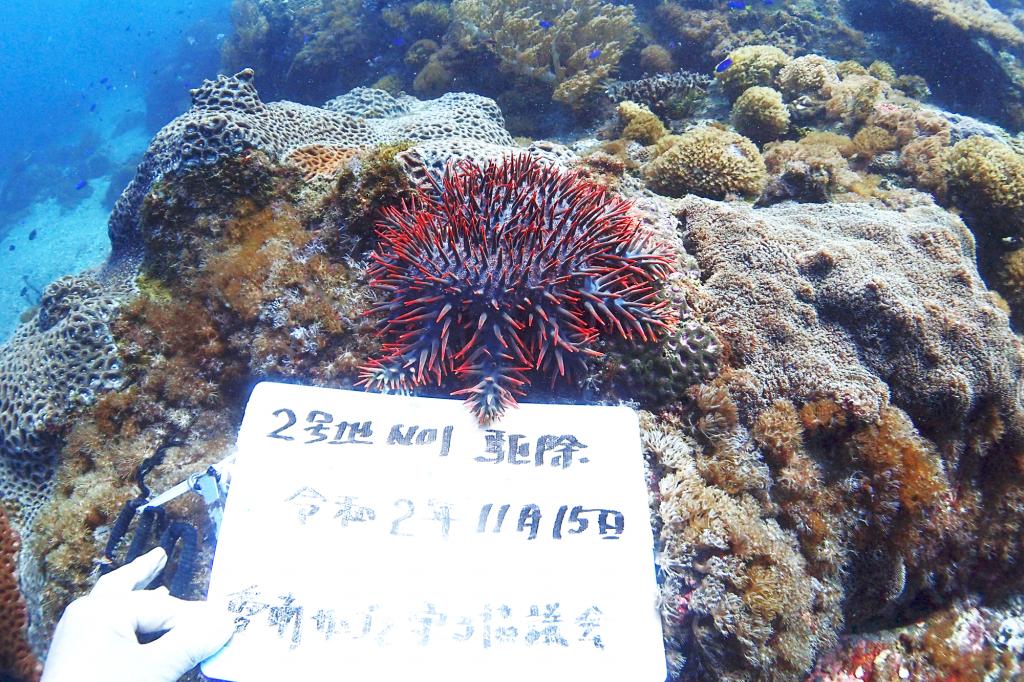 海中で撮影した、岩が全てサンゴに覆われている場所。サンゴの上にはとても大きなどくどくしい色をしたオニヒトデが堂々とサンゴの上に載って捕食している最中でした。