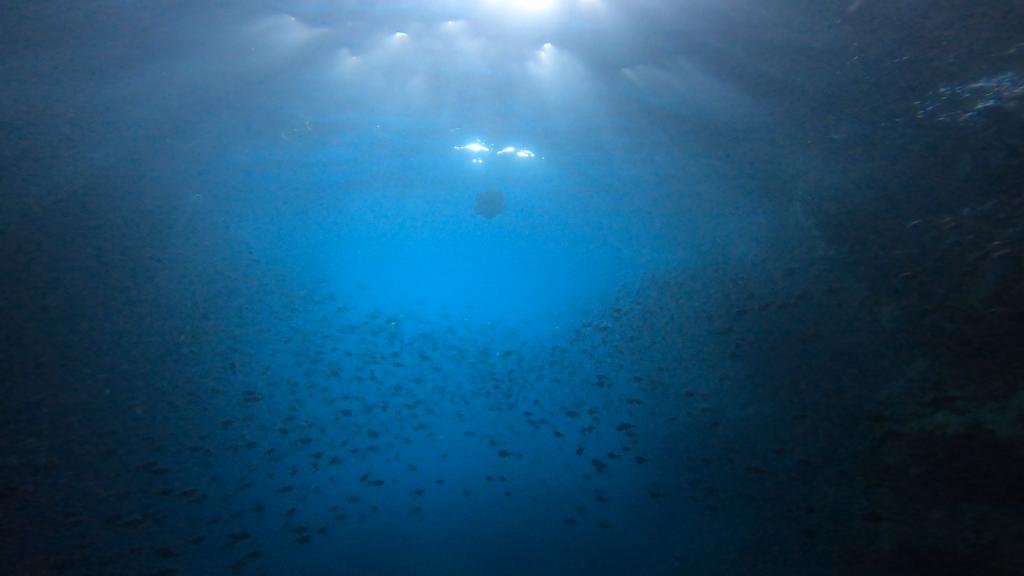 魚の群れを挟んでおくの方に、なにやら物体が見える。水中ドローンです。